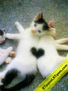 Heart On Cats2